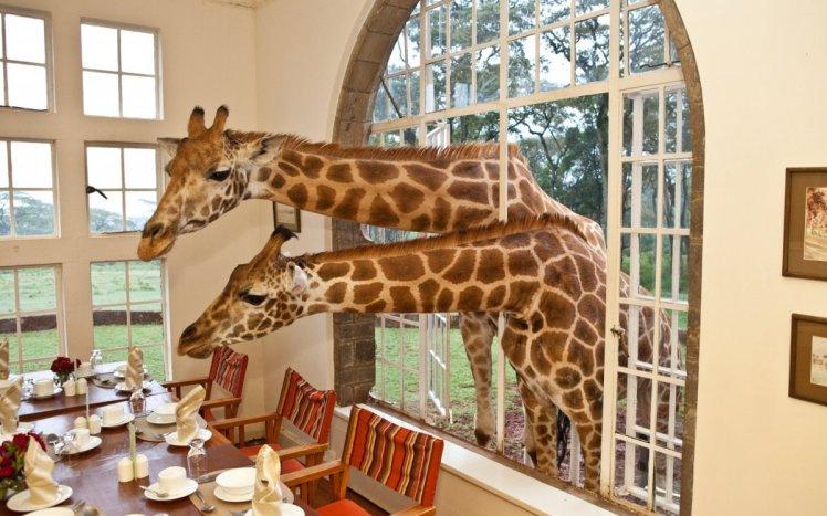 4-giraffe-manor-1200x750
